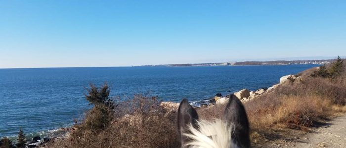 Horseback rinding and the deep blue water