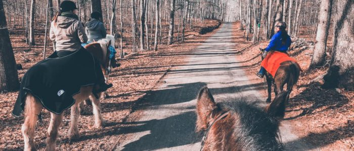 Group of horseback riders on a trail