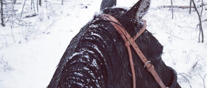 Horseback riding in the snow view