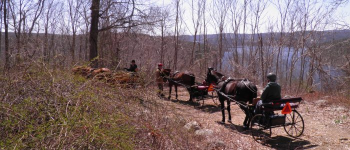 Carriage drivers and horses on trail