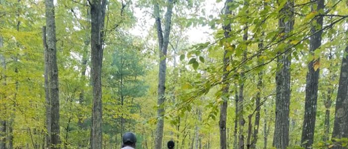 Group of horseback riders through the woods