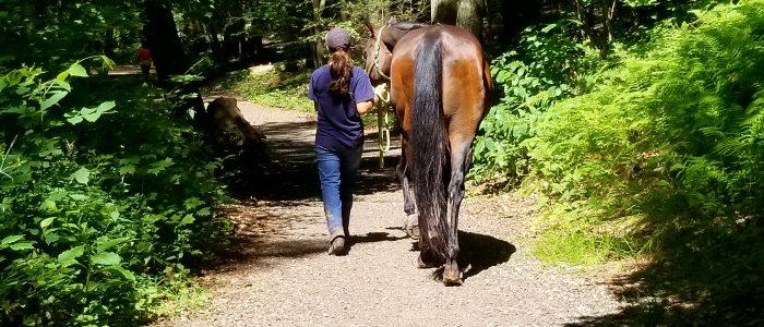 Girl walking her horse through a path